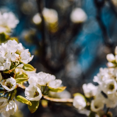 Spring photo by Chase Baker.