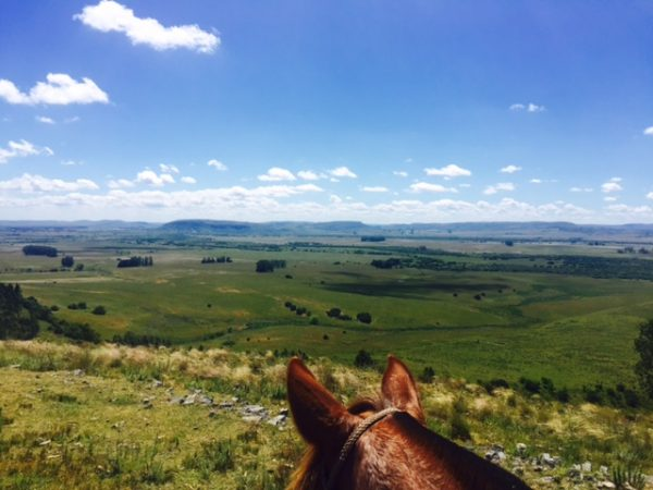 View from horseback of the countryside in Uruguay