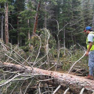 Student walking across a fallen tree in Rocky Mountain National Park