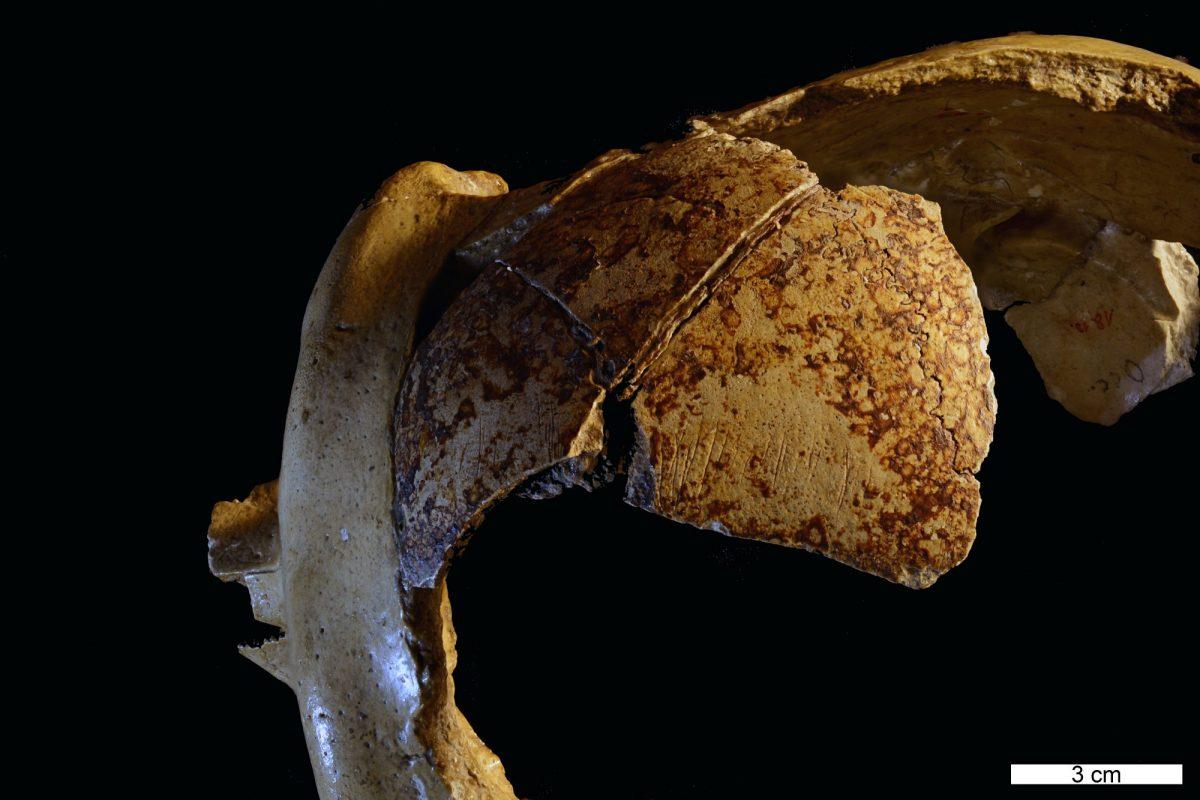 Neandertal cranium with markings