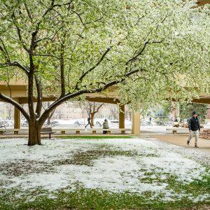 CSU Clark building in springtime | Spring snow