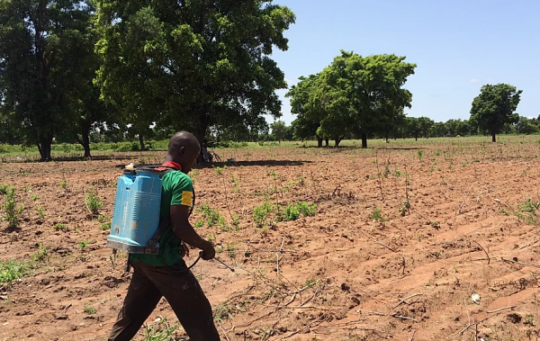 A Burkinabè man uses a backpack sprayer to apply pesticides to cotton fields.